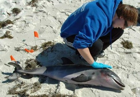 dolphin_dying